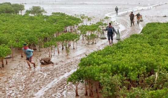 Vườn quốc gia Xuân Thủy Nam Định đắm say bao du khách
