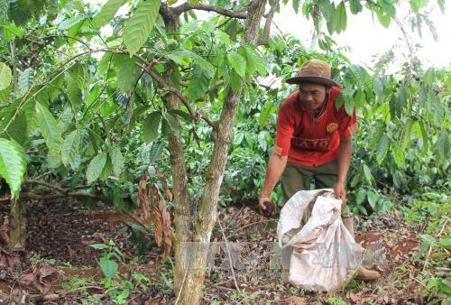 Kết quả hình ảnh cho Phan Hữu Dương sản xuất cà phê
