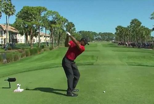 Video Tiger Woods tung cú đánh golf trúng con ngỗng