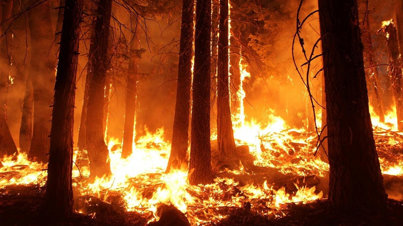 Cháy rừng lan rộng tại Siberia và vùng Viễn Đông của Nga
