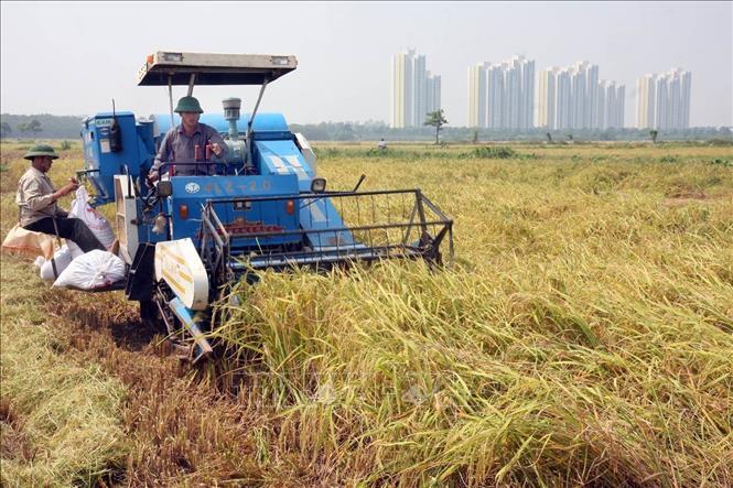 Phát triển nông nghiệp gắn với chuyển đổi mô hình tăng trưởng