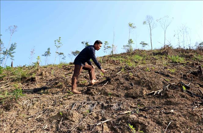 Xác minh, làm rõ trách nhiệm vụ phá rừng phòng hộ tại Lăng Chua ...