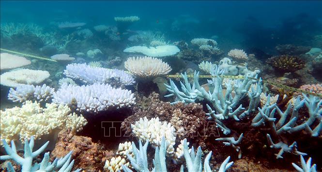 Giới khoa học Australia kêu gọi hành động khẩn cấp để cứu các hệ sinh thái