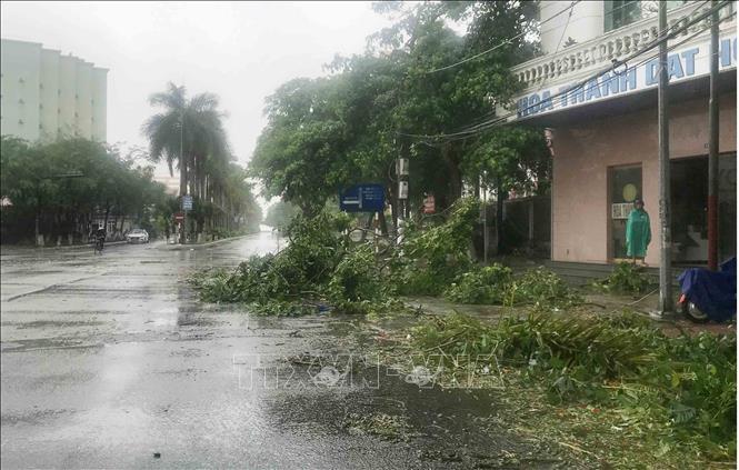Cành cây gãy đổ tại khu I Đồ Sơn, Hải Phòng sau khi bão số 2 đổ bộ sáng 4/7. Ảnh: An Đăng/TTXVN
