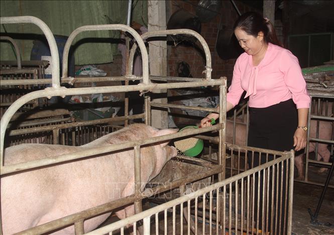 Chính sách cho vay tái đàn lợn phát huy hiệu quả
