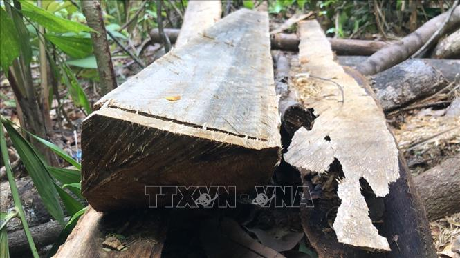 Vụ ᴘʜá rừng Minh Long (Quảng Ngãi): Lời giải thích có hợp lý?