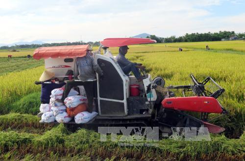 Hỗ trợ cho vay thu mua thóc, gạo vụ Đông Xuân