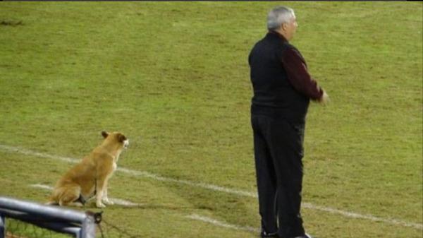 Ngộ nghĩnh chú chó đi lạc tình nguyện làm trợ lý huấn luyện