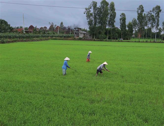 Việt Nam sẽ ứng dụng công nghệ viễn thám vào sản xuất lúa