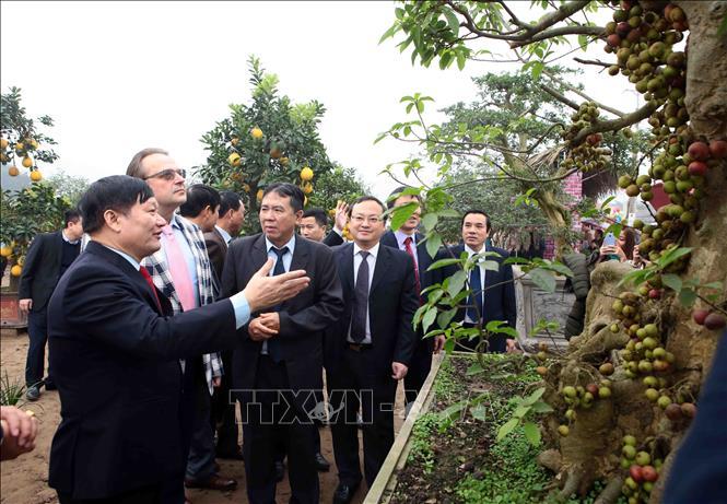 Các đại biểu tham quan hoa, cây cảnh tại lễ hội. Ảnh: Pham Kiên/TTXVN