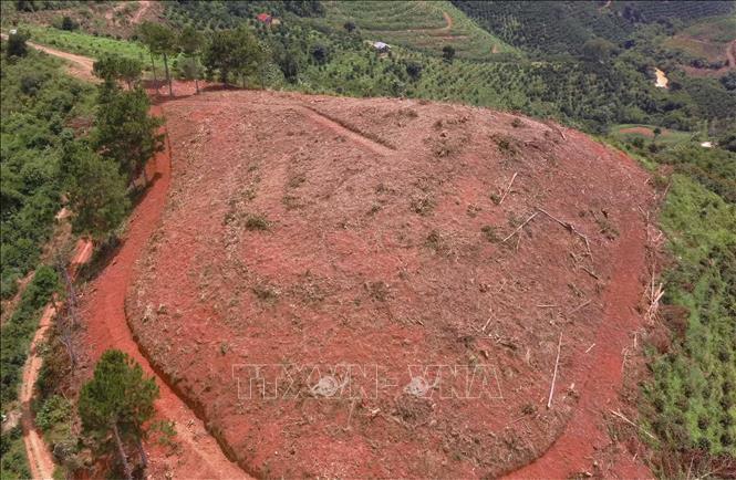 Phá rừng chiếm đất diễn biến phức tạp tại Lâm Đồng