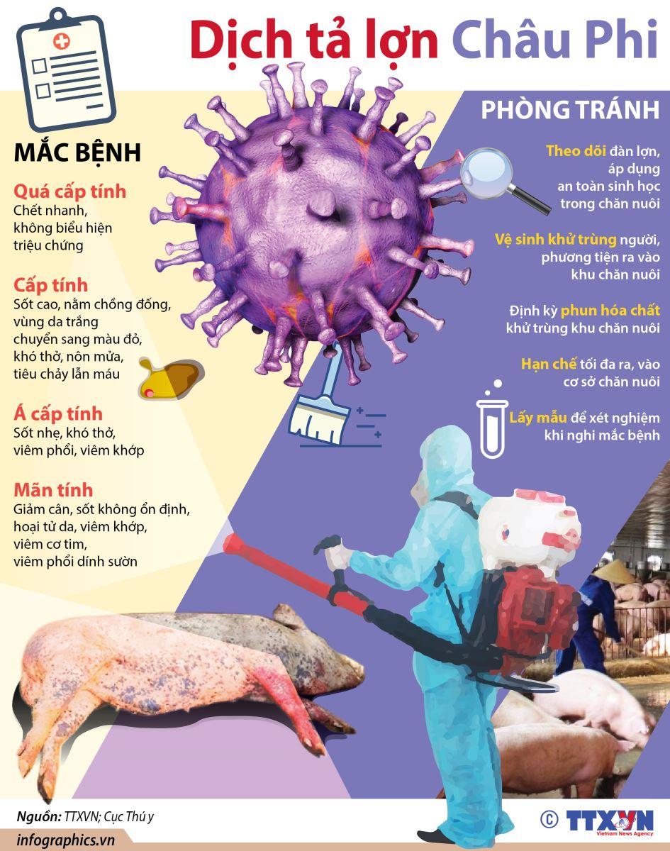 Tăng cường lãnh đạo, chỉ đạo công tác phòng, chống dịch bệnh trên đàn lợn