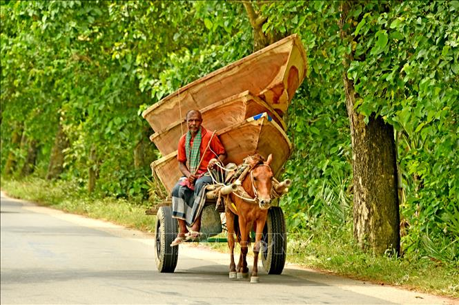 https://cdnmedia.baotintuc.vn/Upload/c2tvplmdloSDblsn03qN2Q/files/2019/08/01/thuyen/thuyen_go_bangladesh4.jpg