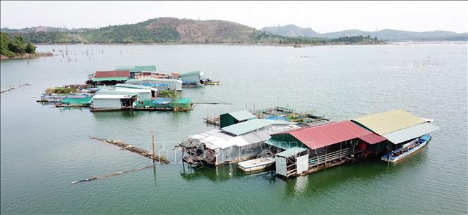 Nâng cao thu nhập từ nuôi cá lồng bè trên lòng hồ thủy điện