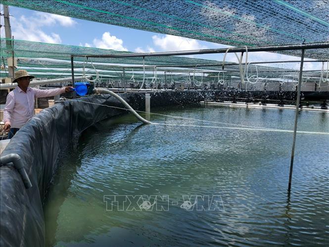 Để sản xuất tôm trở thành ngành kinh tế mũi nhọn