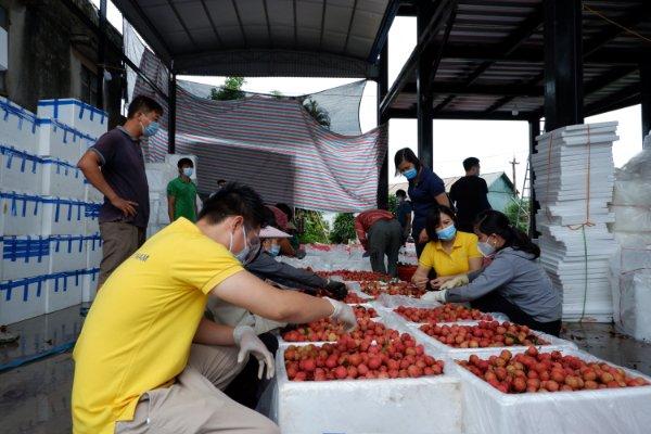 Tạo điều kiện thúc đẩy tiêu thụ nông sản qua sàn thương mại điện tử