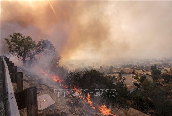 Thu thập ADN để nhận dạng nạn nhân cháy rừng ở California, Mỹ