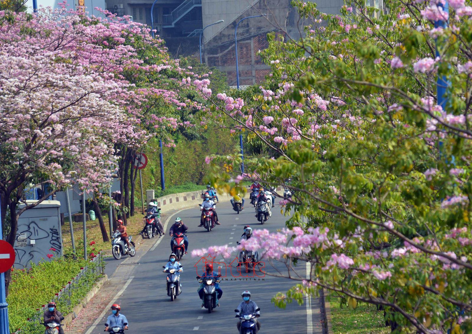 Image result for hoa kèn hồng sài gòn