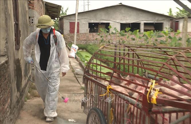 FAO Việt Nam hỗ trợ kiểm soát dịch tả lợn châu Phi