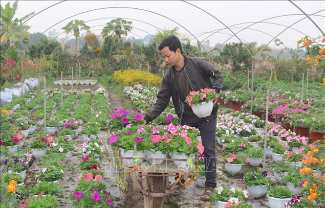 Hiện nay, các cơ sở trồng hoa trên địa bàn tỉnh Hà Nam đang tất bật chăm sóc, thực hiện những công đoạn cuối cùng để kịp phục vụ Tết Canh Tý 2020 – vụ sản xuất quan trọng nhất trong năm.