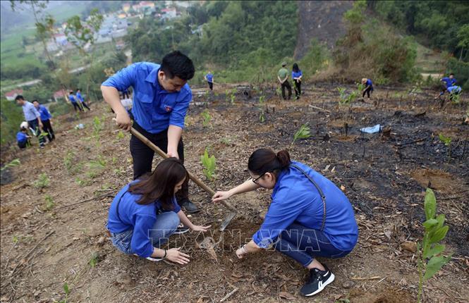Xã hội hóa nguồn lực để trồng 1 tỷ cây xanh