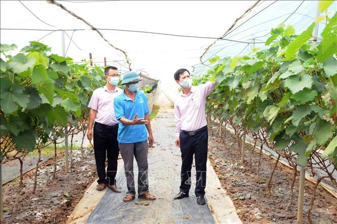 Tin Kinh tế: Hiệu quả từ nguồn vốn vay giải quyết việc làm ở Sơn La